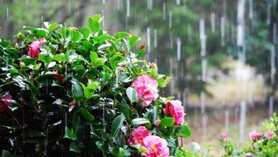 RainySpringDay-1