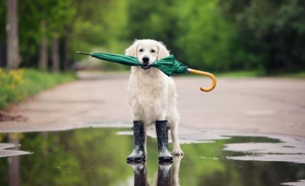 дъжд1